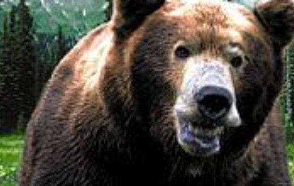 Царство русского медведя 1992