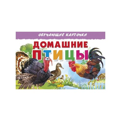 обучающие книги Домашние птицы. Обучающие