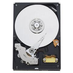 Western Digital WD Blue 80 GB (WD800BB)