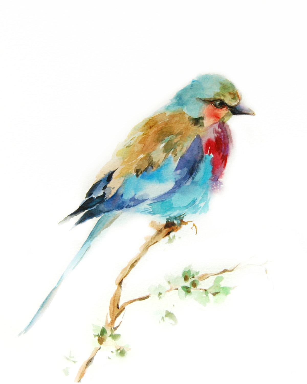 GEORGIO PEVIANI Watercolor pictures of birds