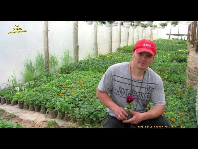 Сад и огород - видео уроки