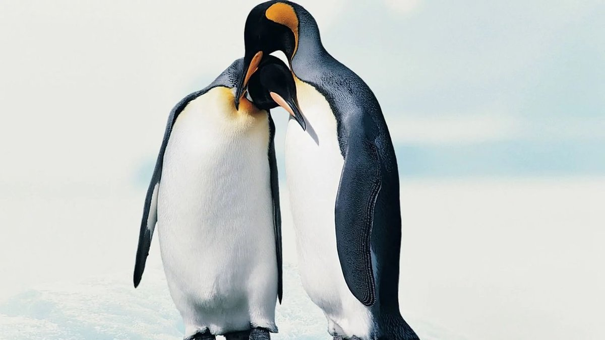 Пингвины на камушках  № 2020646 бесплатно