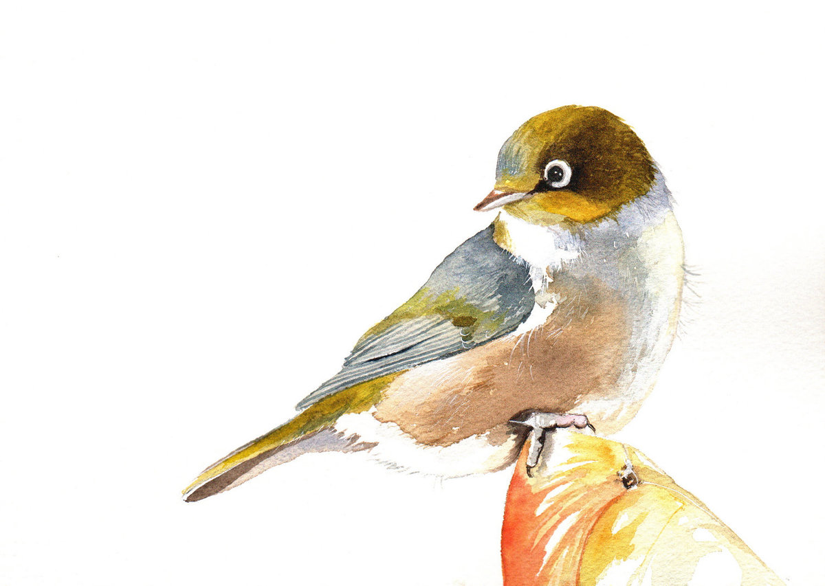 Site Map - UAL Watercolor pictures of birds