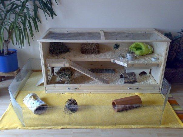 Из чего можно сделать домик для морской свинки своими руками 55