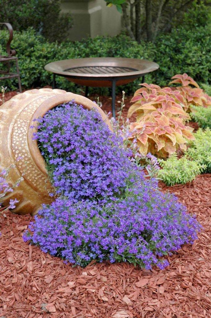 Интересный садовый цветок