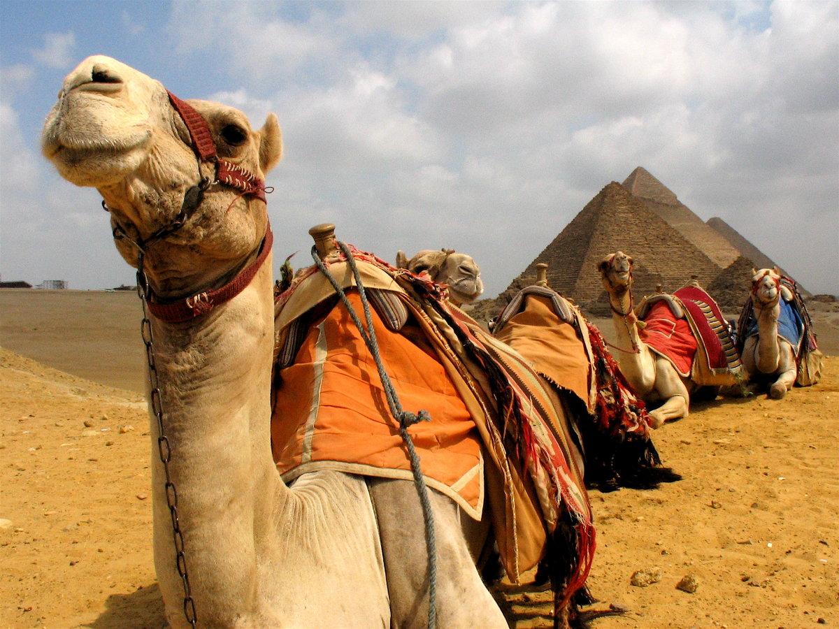 Новый год в турции и египте