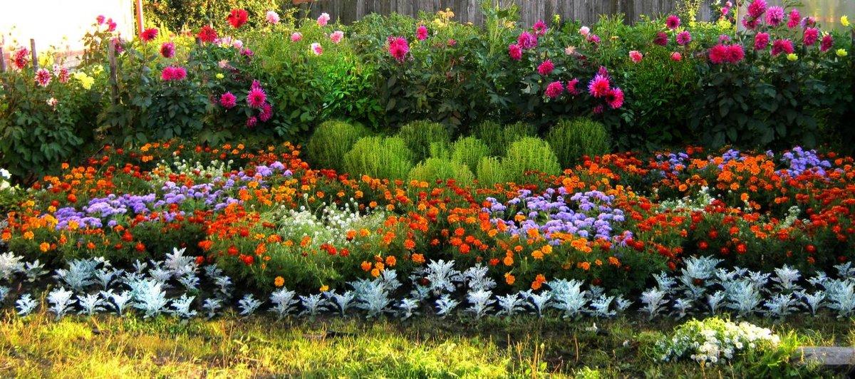 Клумбы своими руками на даче фото цветущее всё лето 19