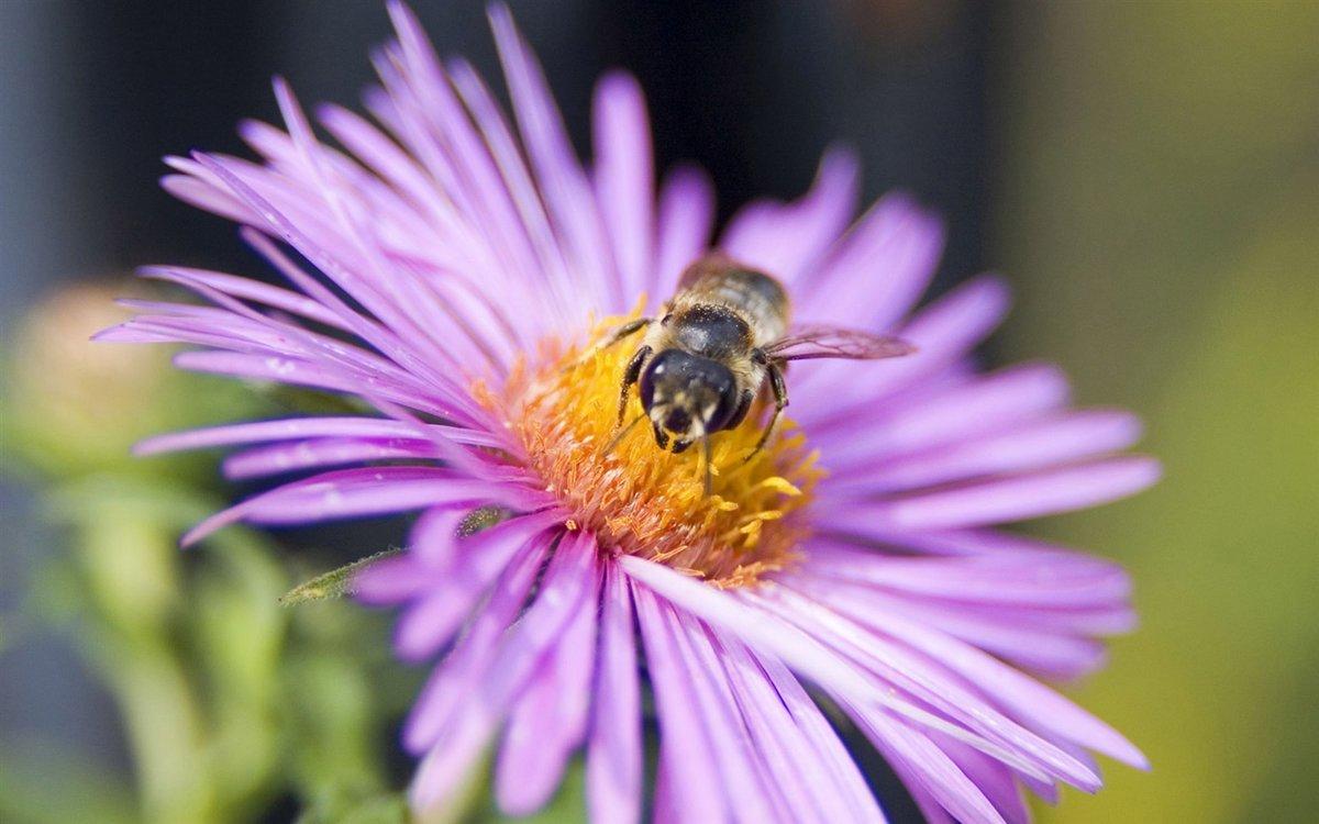 пчела цветы розовые flowers pink bee  № 910845 без смс