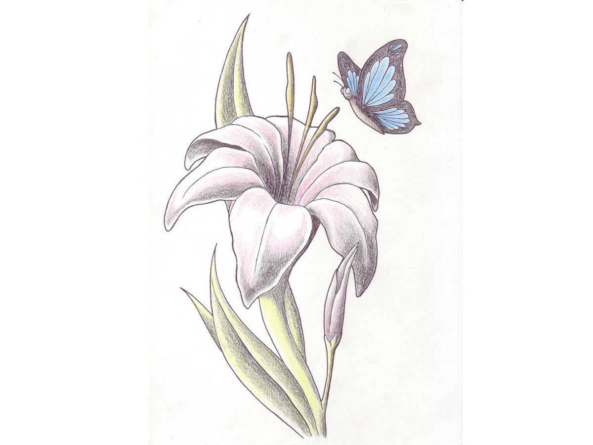 Как нарисовать лилию Рисунок лилии карандашом поэтапно 54