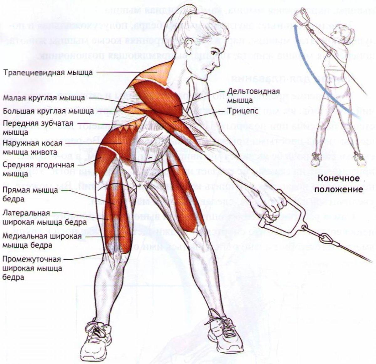 Как накачать боковые мышцы пресса 56