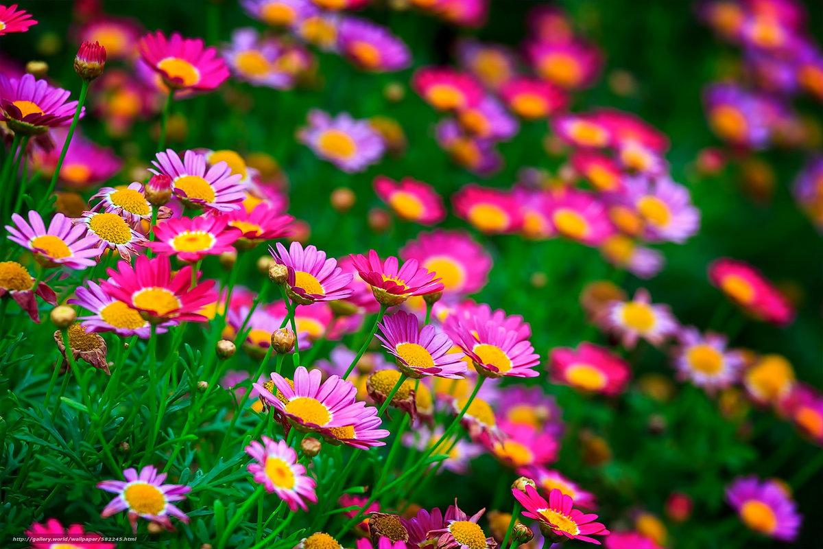 ТОП-7 самых красивых цветущих долин мира фото цветочных 60