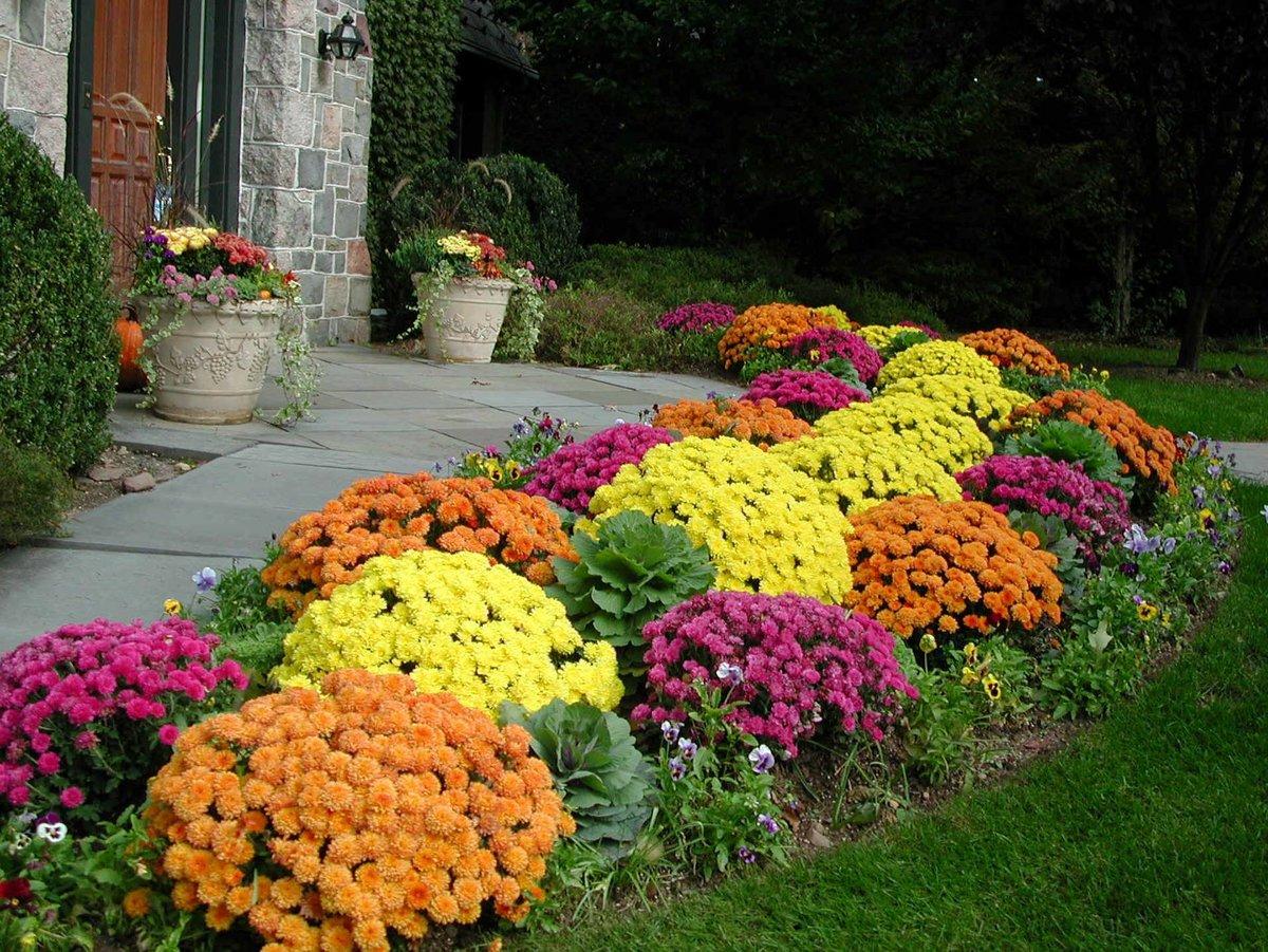 Цена на цветы для клумбы фото и названия
