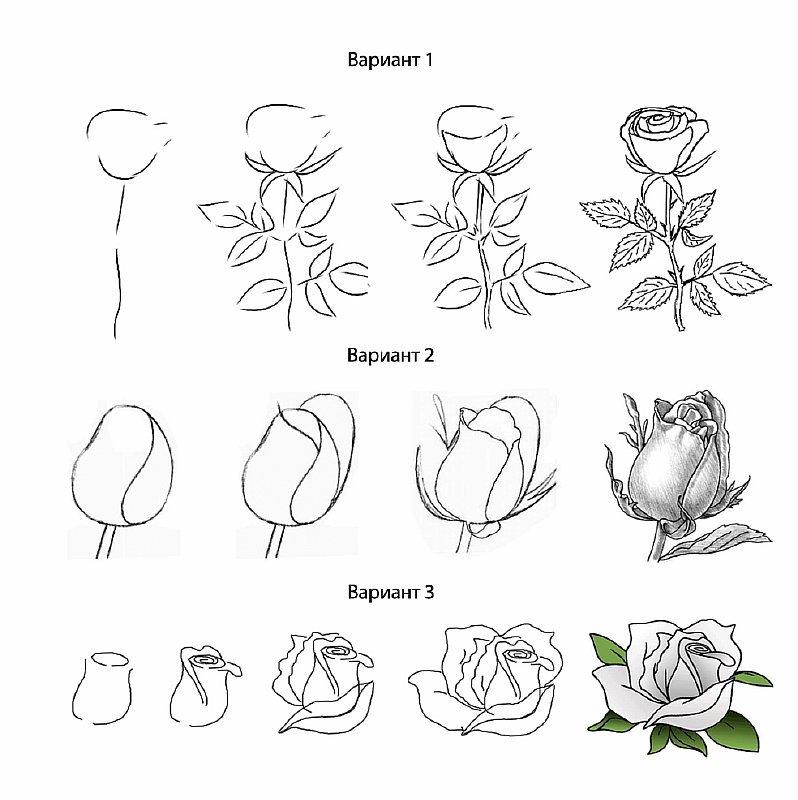 Как нарисовать розу своими руками поэтапно 38