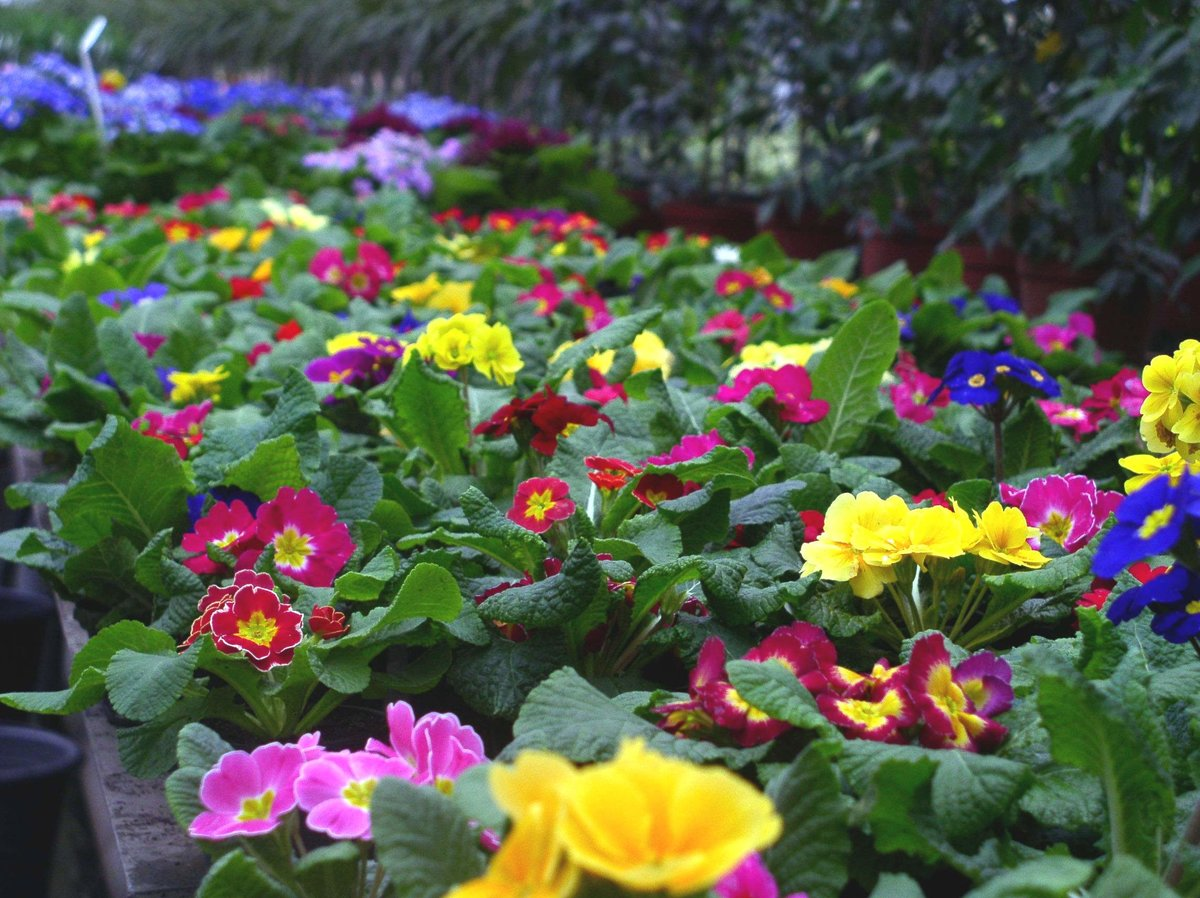 Ассортимент цветов от а до я