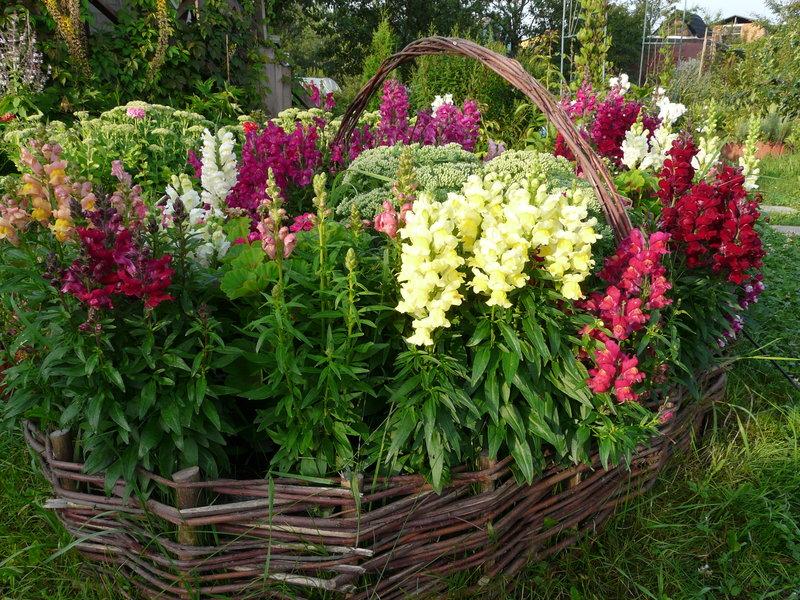 Фото цветы многолетники высокие для дачи