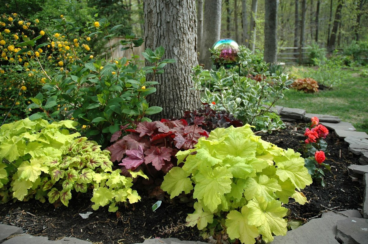 Гейхера в саду ландшафтный дизайн