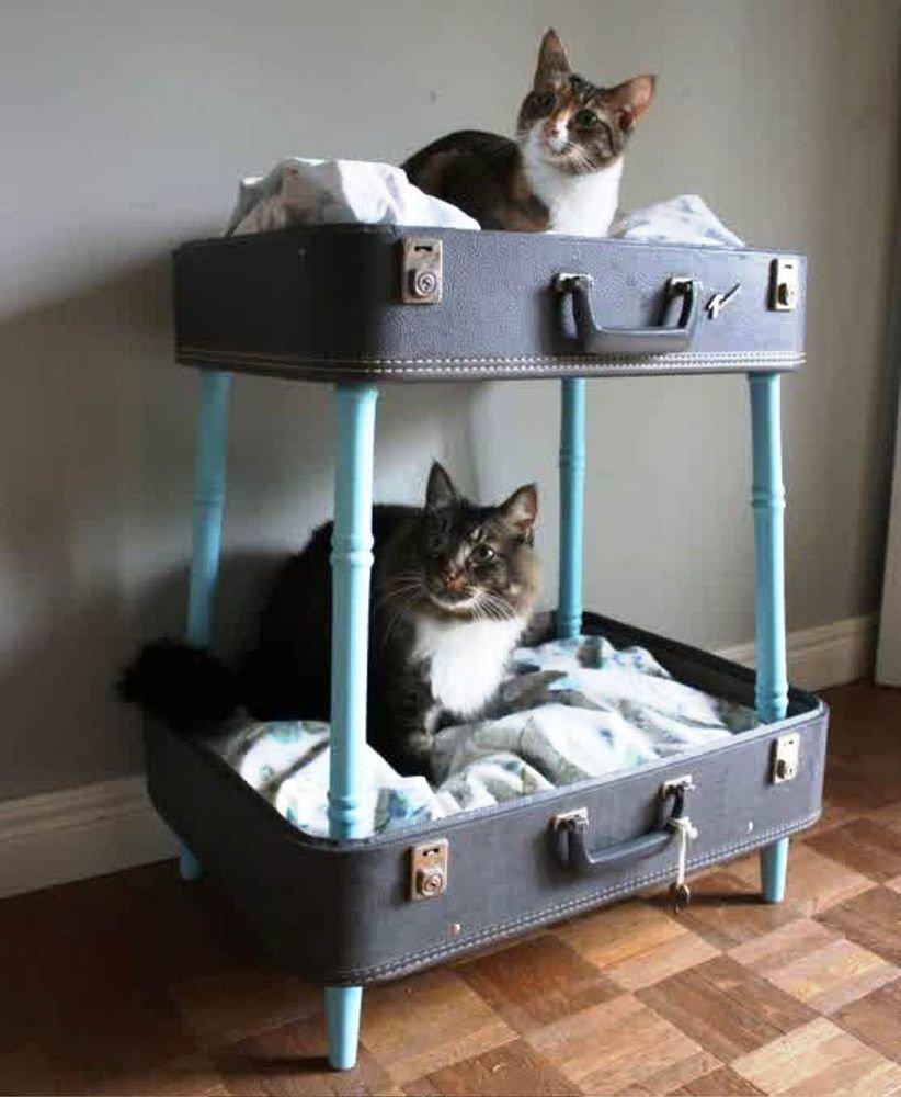 Как сделать для старой кошки