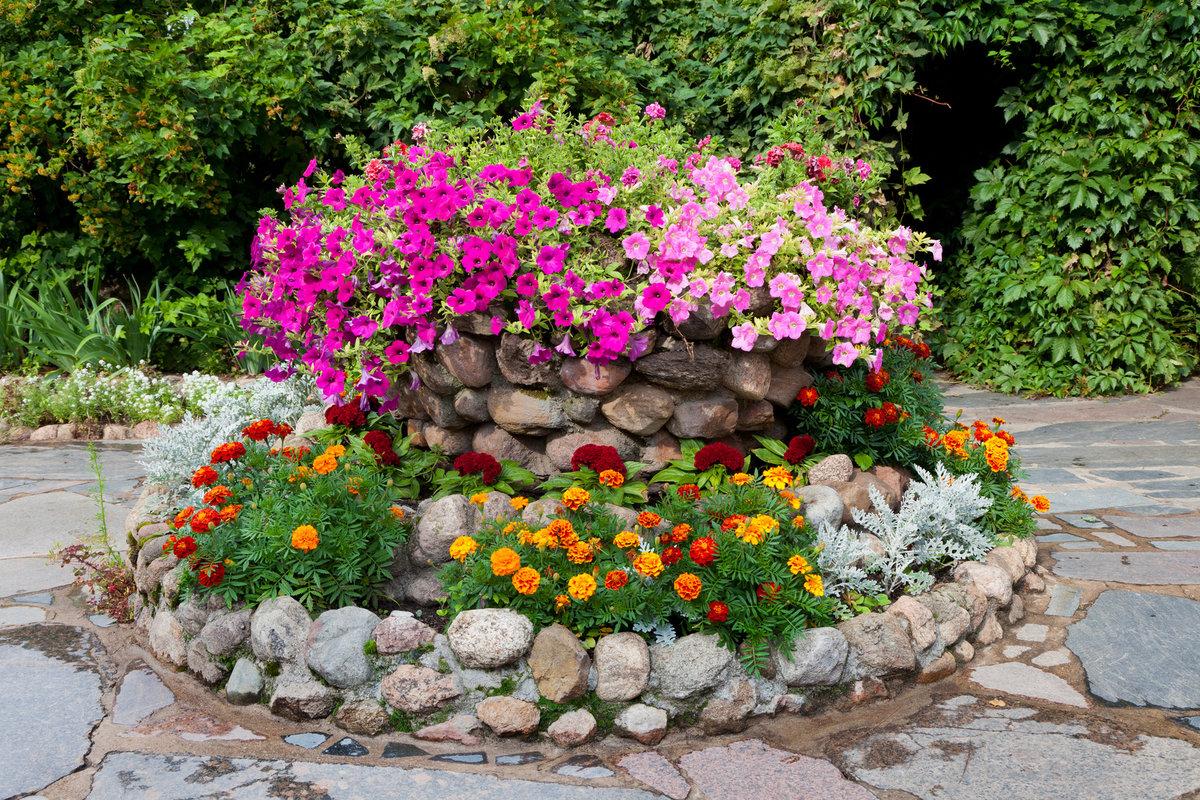 Фото дизайна цветника с петунией