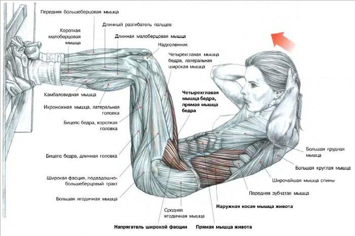 Как сделать что бы мышцы прошли