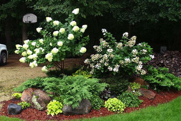 Как сажать кустарники и цветы вместе 11