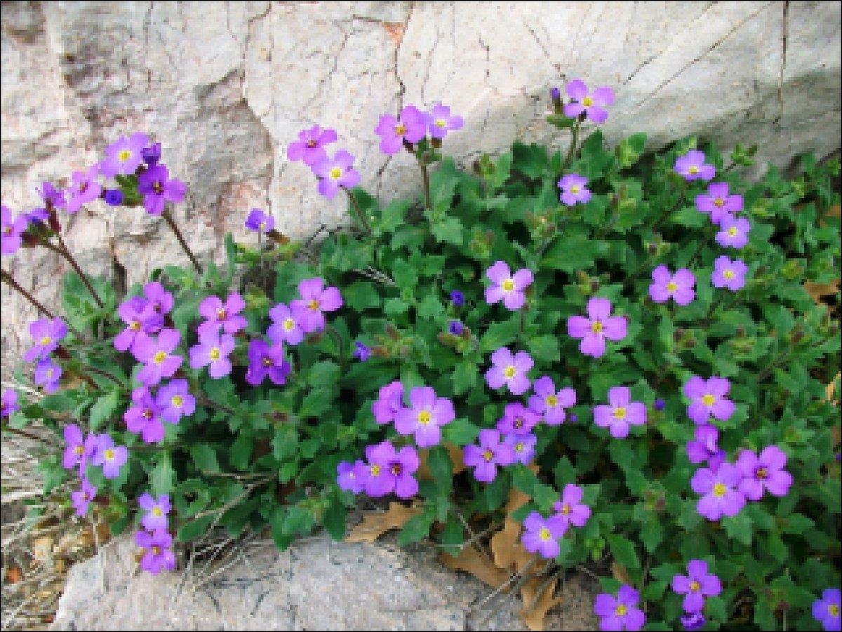 Многолетние садовые цветы не требующие ухода крупные и долгоцветущие