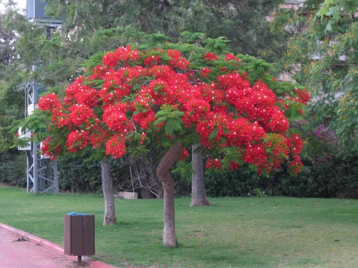 Цветы дерево фото с названиями