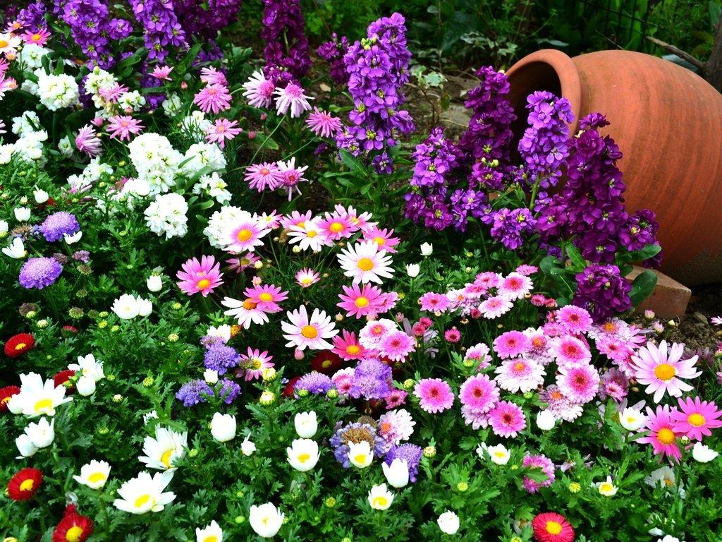 Многолетние цветы в цветник