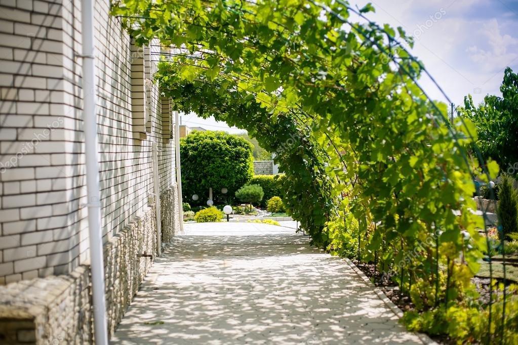 Виноград в саду дизайн