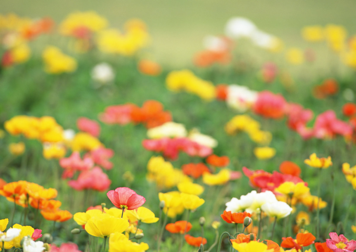 ТОП-7 самых красивых цветущих долин мира фото цветочных 55