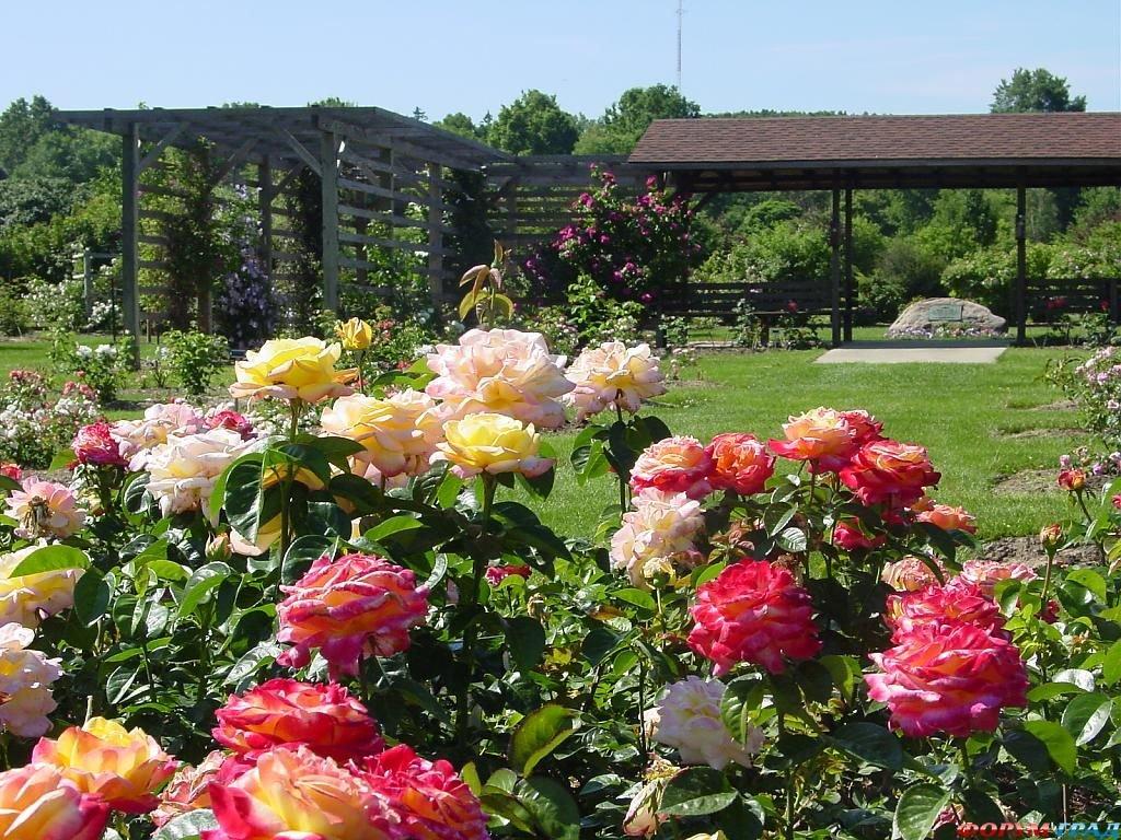 Розарий на даче своими руками фото садовый  208