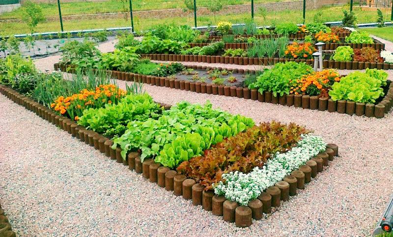 Декоративный огород: как сделать красивые грядки Дом
