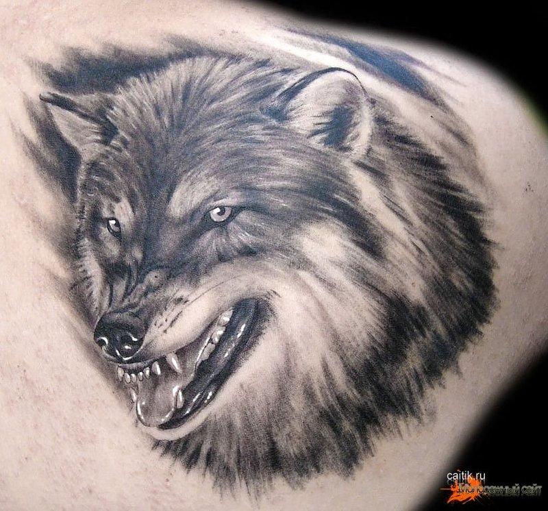 Значение тату волка с оскалом на зоне