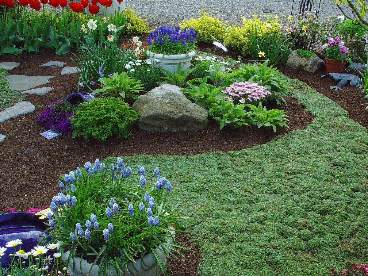 Почвопокровные цветы для клумбы