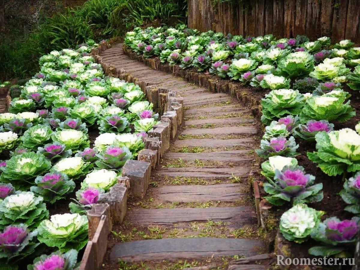 Декоративная капуста выращивание и уход в саду фото