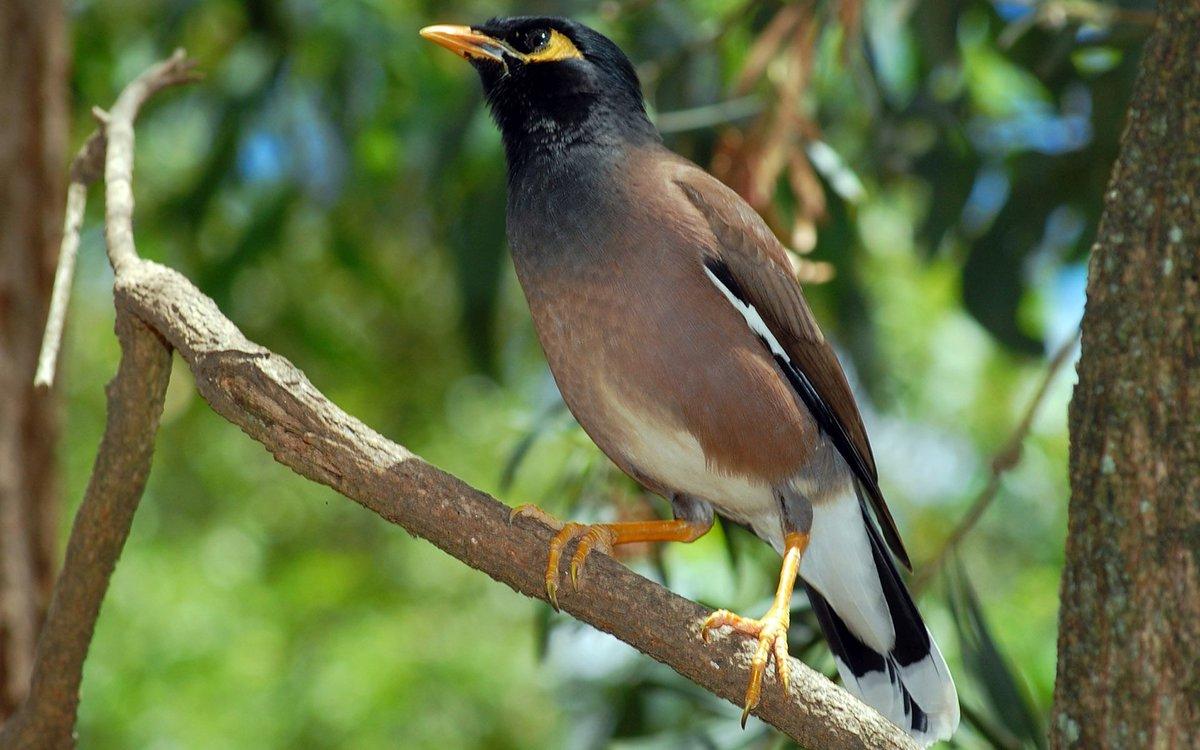 BirdsnWays - Breeders of Exotic Birds - States O - S Prabhas new movie photos