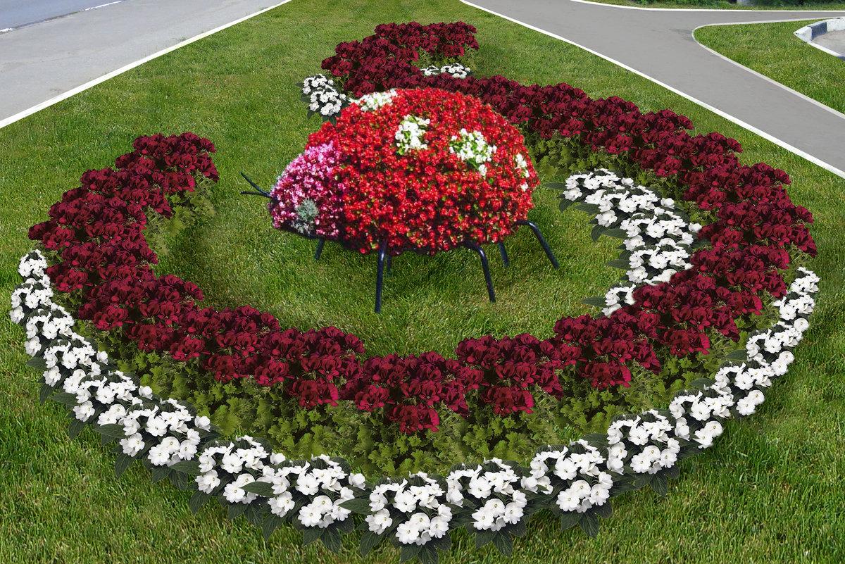 Клумбы цветы фото красивые