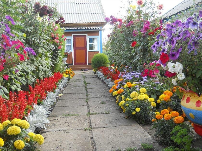 Цветники и клумбы своими руками на даче фото цветущее всё лето