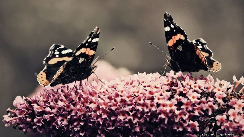 Бабочка1  № 2342614 бесплатно