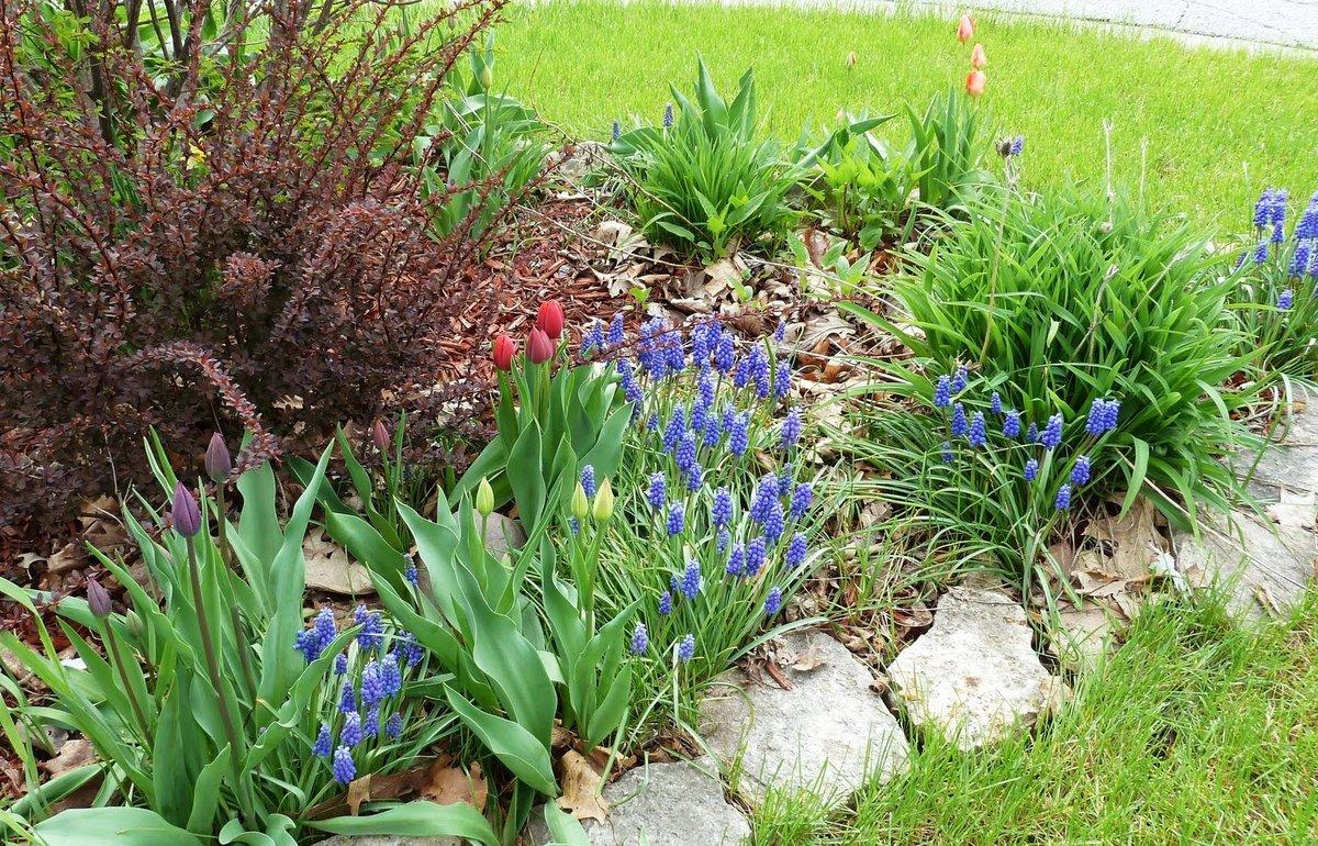 Узнать садовый цветок по фото