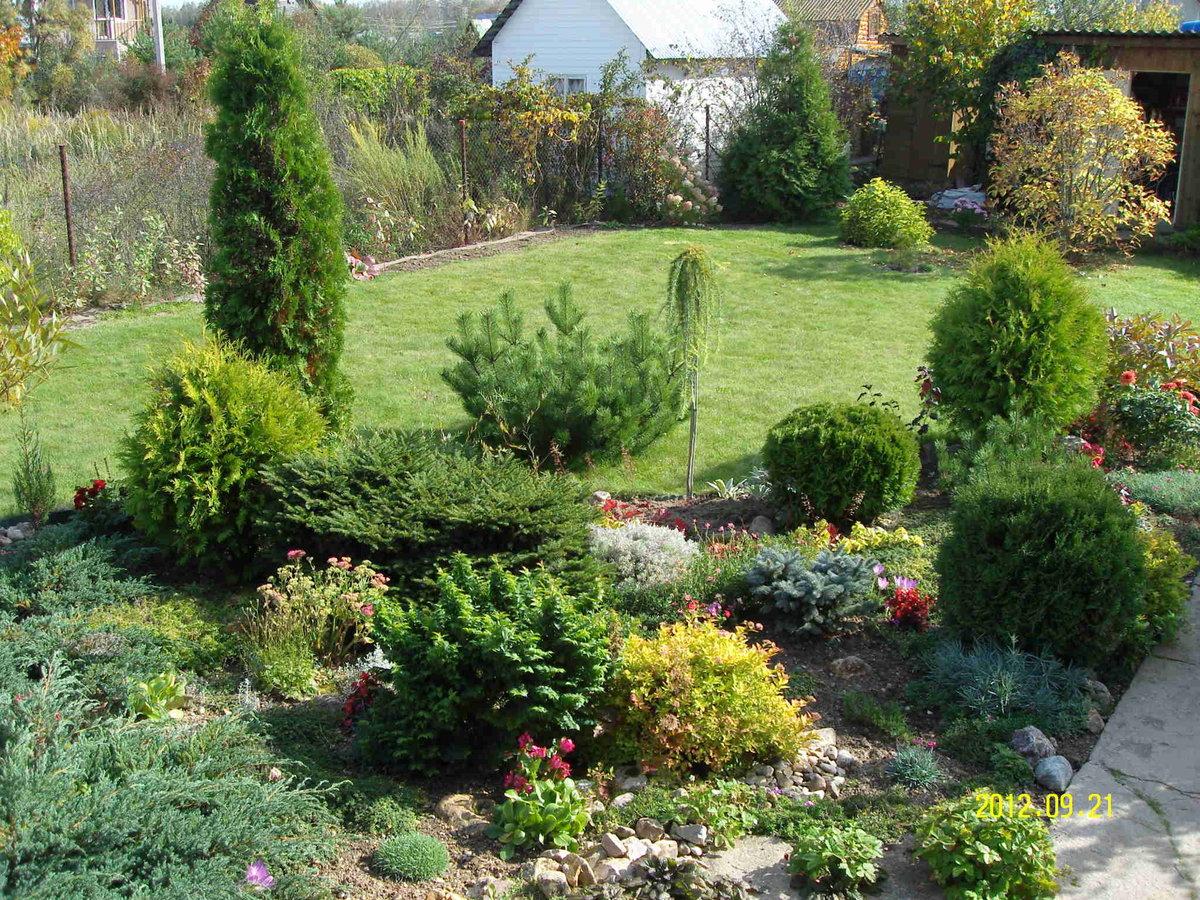 Где лучше сажать хвойники в саду 97