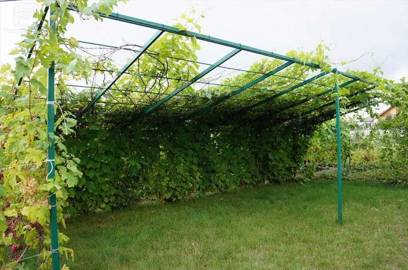 Для винограда опора своими руками из арматуры 11