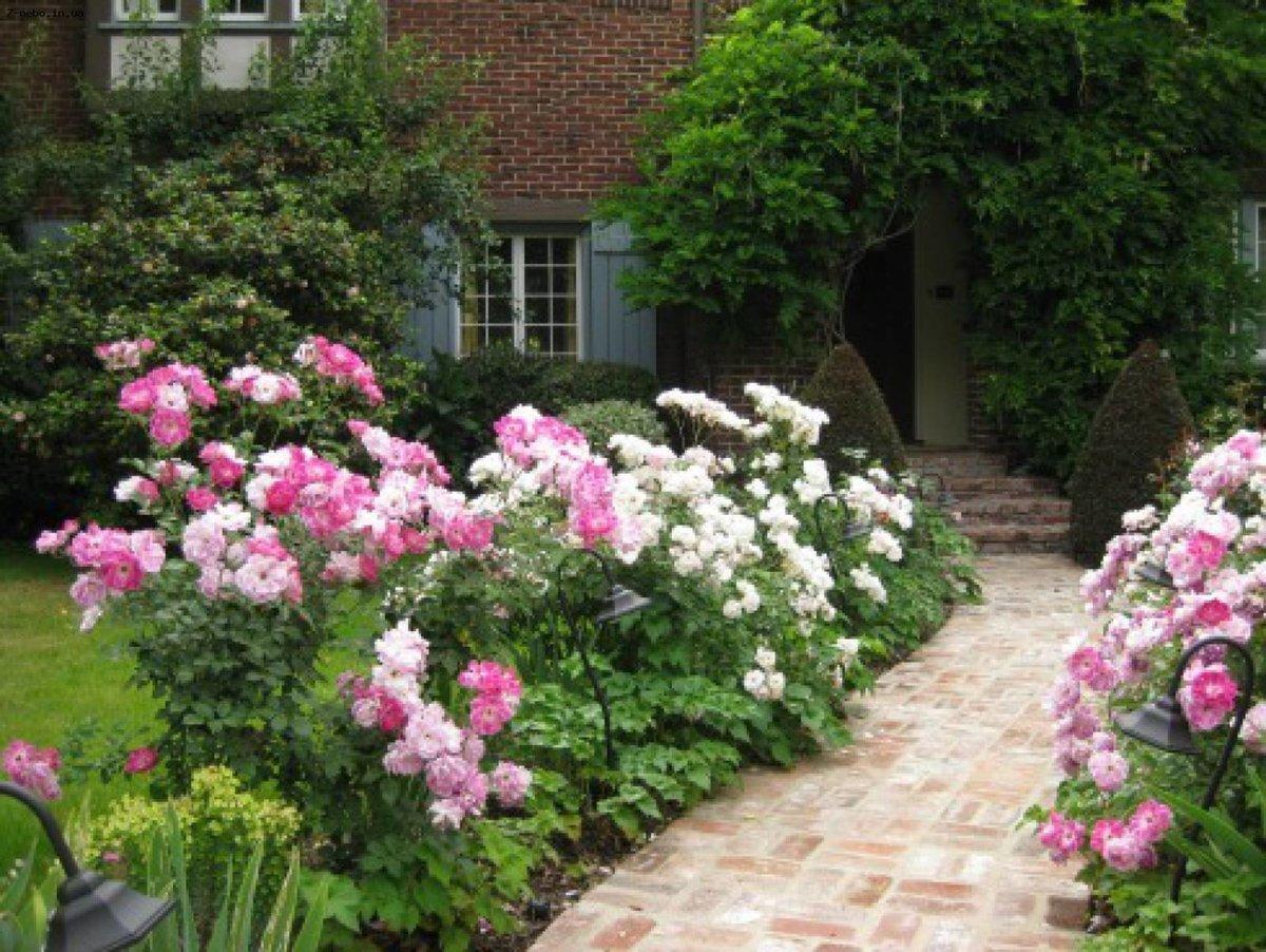 Розарий на даче своими руками фото садовый  291