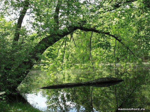 накренившееся над речкой дерево  № 1217070 загрузить
