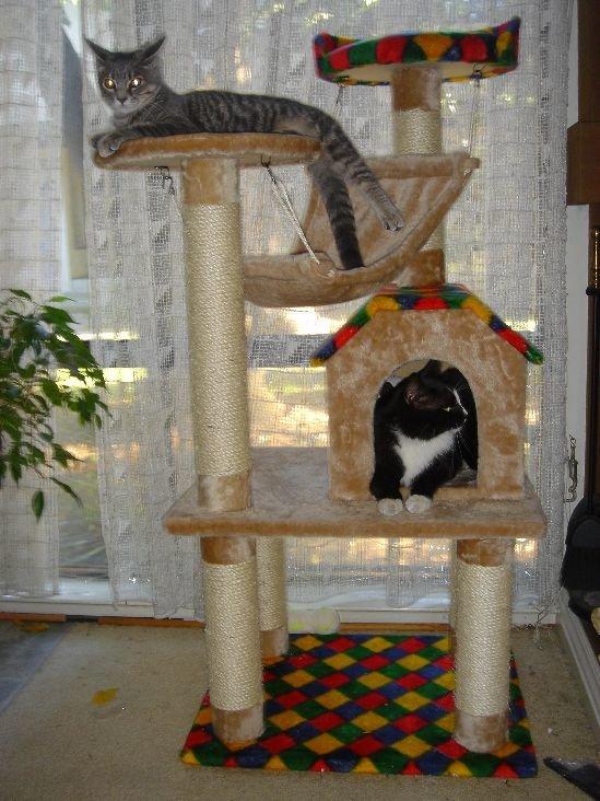 Фото домика для кошки своими руками