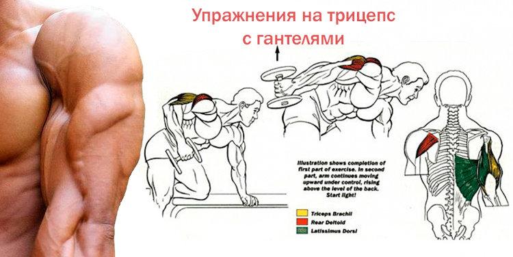 Упражнение на трицепс и бицепс в домашних условиях 137