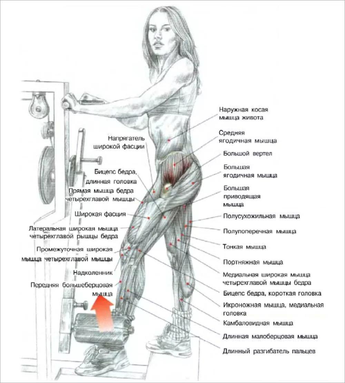 Прокачать мышцы бедра в домашних условиях