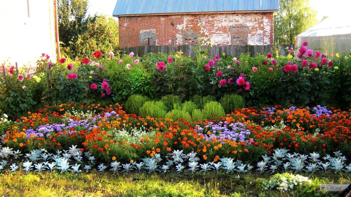 Комнатный цветок, цветущий круглый 73
