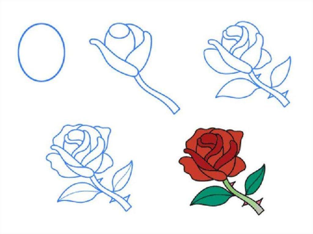 Как нарисовать розу своими руками поэтапно 73