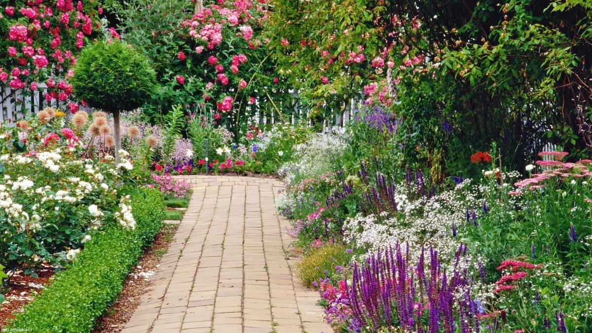 Фото цветы в ландшафте сада