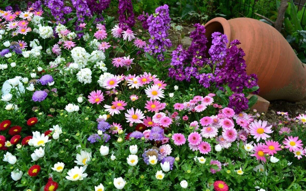 Каталог цветов с ценами для сада